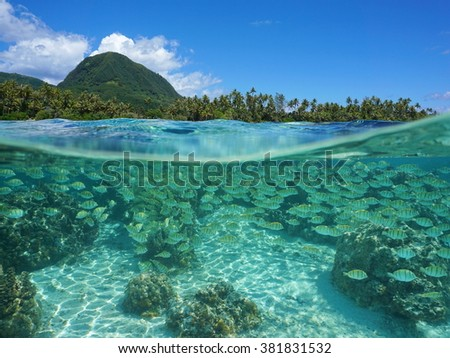 Split view above and below water surface near a tropical shore with a school of fish underwater, Pacific ocean, Huahine island, French Polynesia - stock photo