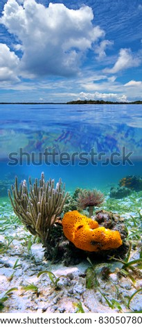 Split view in the Caribbean sea with cloudy blue sky, and underwater, sea sponge with sea rod coral and feather duster worm, Panama - stock photo