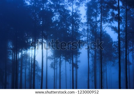 spooky blue toned forest background - stock photo
