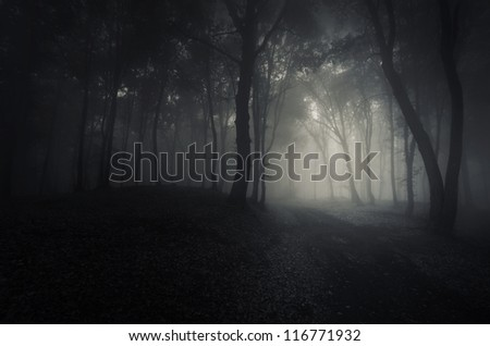 spooky dark forest - stock photo