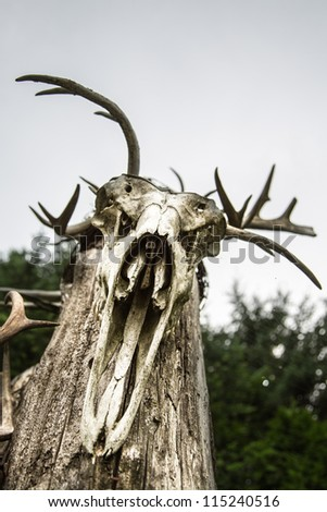 Spooky deer skull staring down at you. - stock photo