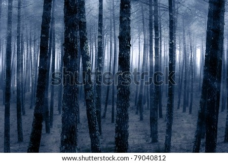 Spooky foggy forest - stock photo