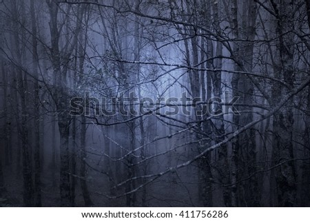 Spooky foggy forest at dusk with light rays.