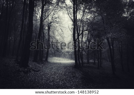 spooky forest at night - stock photo