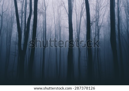 spooky forest night - stock photo