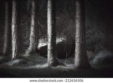 Spooky forest with conifers and big boulder - stock photo