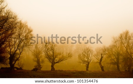 Spooky landscape showing remains of old forest on misty autumn day. - stock photo
