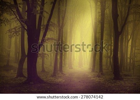Spooky light into the forest - stock photo