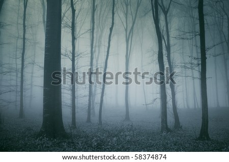 spooky scene from a dark forest - stock photo