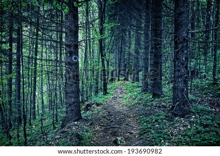 Spooky toned image of a pine forest at night with a footpath - stock photo