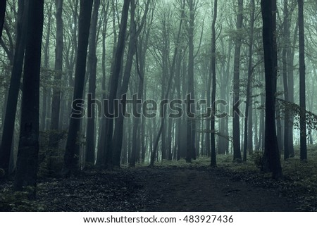 Spooky trail in horror foggy forest