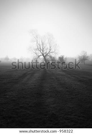 Spooky Tree - stock photo