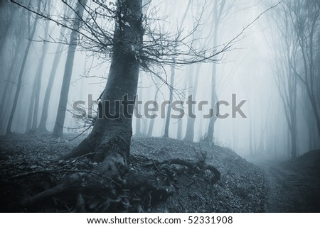 spooky tree in a cold forest with fog
