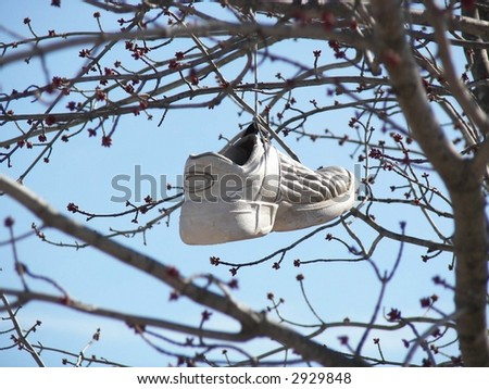 sport shoe hanging on a tree branch