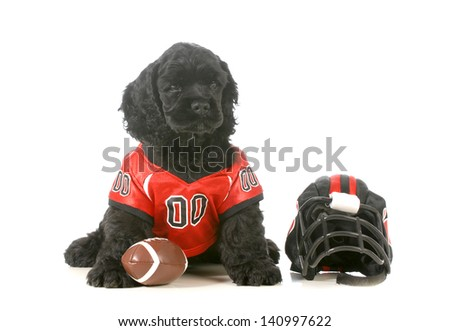 sports hound - american cocker spaniel puppy wearing football uniform isolated on white background - stock photo