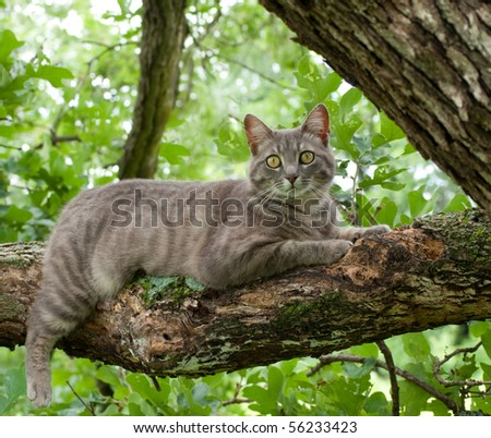 Spotted blue tabby cat on tree branch - stock photo
