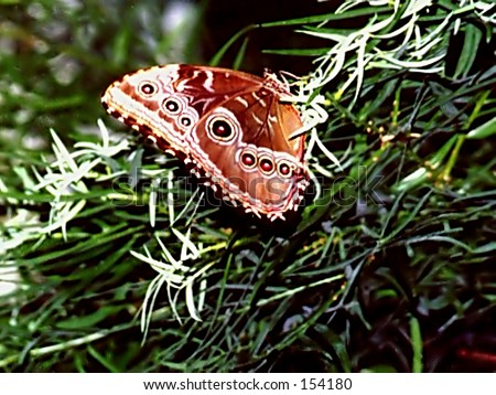 Spotted Butterfly - stock photo