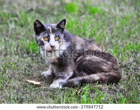 Spotted cat lying on the grass near the falling leaves - stock photo