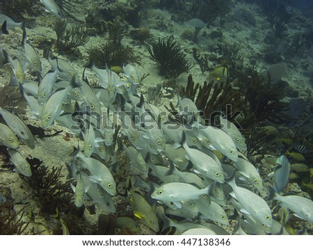 Spotted fish in a school at the bottom of the sea - stock photo