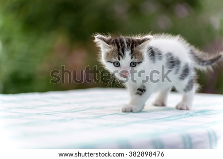 Spotted kitten standing on a table in the garden - stock photo