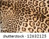 Spotted leopard skin - stock photo