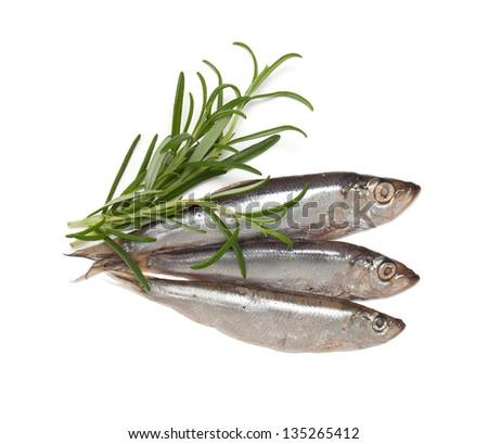 sprat fish and rosemary isolated on white background - stock photo