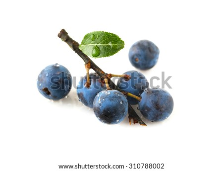 Sprig blackthorn isolated on a white background - stock photo