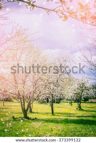 Sprig garden or park with blossom trees and glade of dandelions. Nature background.