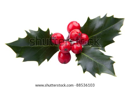 Sprig of christmas holly with red berries isolated on a white background - stock photo