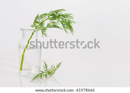 sprig of fresh herbs in glass bottle, isolated with copy space at right - stock photo