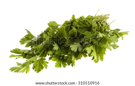 Sprig of fresh parsley on a white background - stock photo