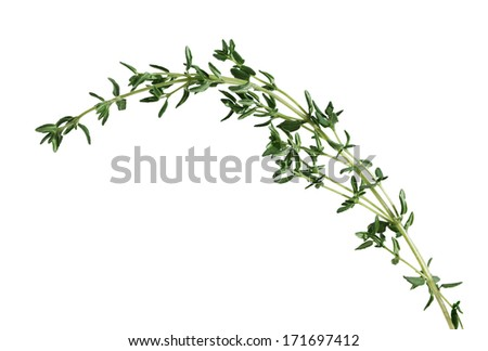 Sprig of fresh thyme leaf isolated on white background - stock photo