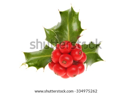 Sprig of Holly with red ripe berries isolated against white - stock photo