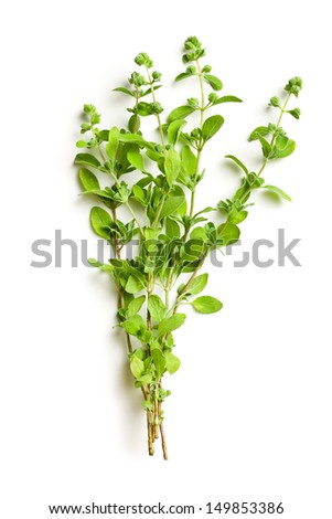 sprig of marjoram on white background - stock photo