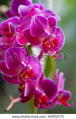 Sprig of orchid in their natural habitat - stock photo
