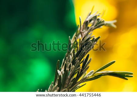 sprig of rosemary and garlic on a wooden light background. - stock photo