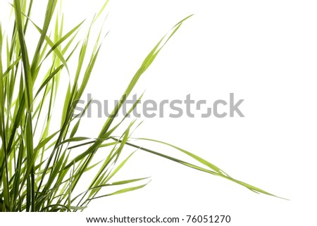sprigs  green grass on white background - stock photo