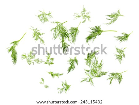 Sprigs of dill isolated on white - stock photo
