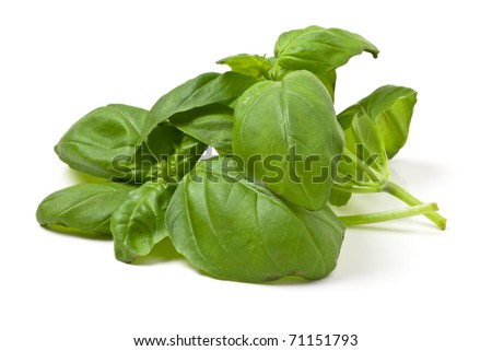 Sprigs of fresh basil from low perspective isolated on white. - stock photo
