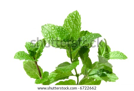 sprigs of fresh mint isolated, - stock photo