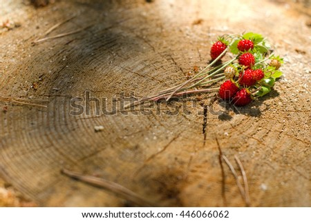 Sprigs of wild strawberries on the background of wooden cut down a tree. The red berries. A stump in the woods. The harvest of berries. Summer day. Wild edible plants.