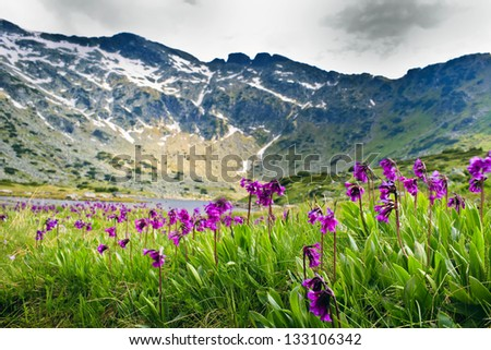 spring after winter - stock photo