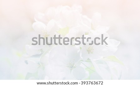 Spring apple blossom, flowers over a light background