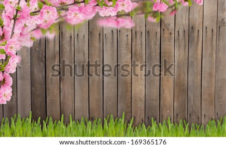 Spring background. Almond flowers and grass against wooden background. Place for your text. - stock photo