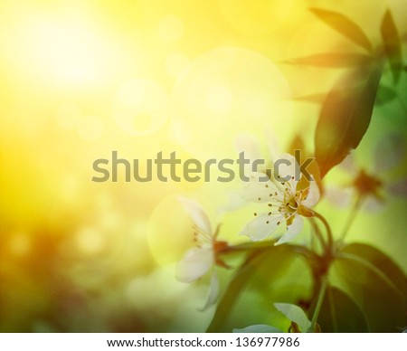 Spring background. Apple blossom with natural colors - stock photo