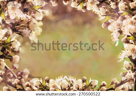 Spring background/Spring flowers/Branch of a blossoming tree - stock photo