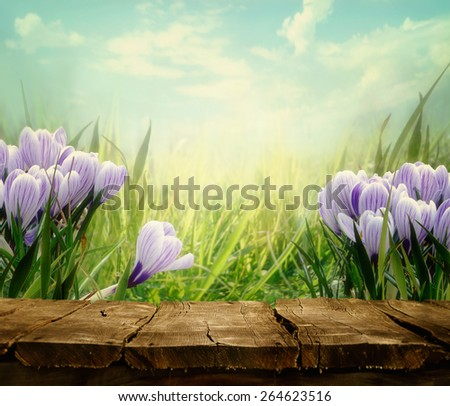 Spring background. Springtime Tabletop with spring flowers. Crocus flowers in meadow. Nature background. - stock photo