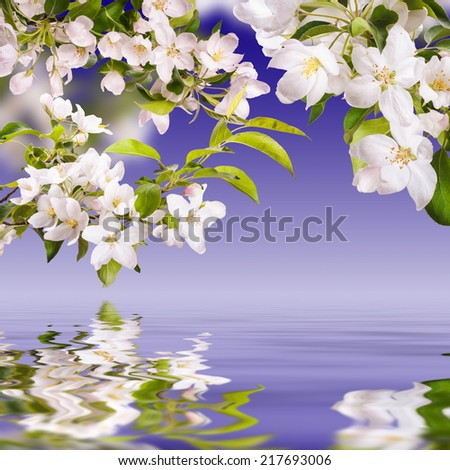 Spring background with apple blossom on a blue sky, reflected in water - stock photo