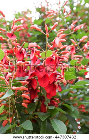 Spring background with beautiful red flowers  - stock photo