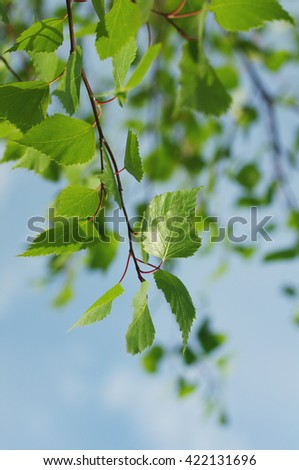 Spring background with bright green leaves of birch against the sky - stock photo